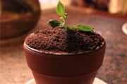 提拉米苏盆栽的做法视频