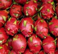 【红色火龙果的功效】红色火龙果