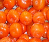 【柿子和香蕉能一起吃】柿子的营养价值_柿子能空腹吃吗_柿子不能和什